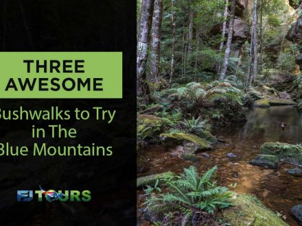 three awesome bushwalks to try in the blue mountains