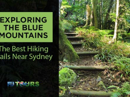 blue mountains best hiking trails